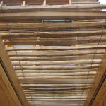 Cleft chestnut solar shading